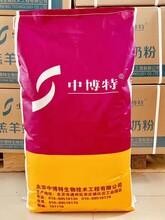 20年老品牌犢牛奶粉廠直銷全脂防腹瀉奶粉圖片