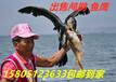 哪里出售賣魚鷹便宜?哪里出售賣鸕鶿便宜