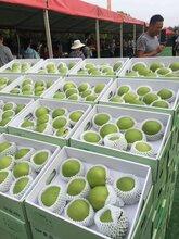 重庆丰都梨树苗,重庆丰都苏翠一号梨子树苗种植技术图片