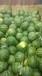 陕西黄河滩万亩甜王西瓜产地最新价格