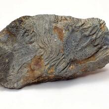 化石私人老板收購一九江個人私下現金收購古玩圖片