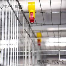 福建全自動養殖蛋雞設備價格實惠田瑞牧業圖片