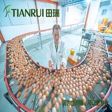 陕西自动化养殖蛋鸡设备质量信得过田瑞牧业图片