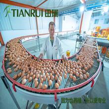 陕西智能化养鸡系统厂家田瑞牧业图片
