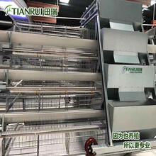 重庆自动化养殖蛋鸡设备哪家好田瑞牧业图片