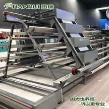 重慶自動化蛋雞養殖設備廠家直銷田瑞牧業圖片