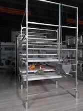 廣西自動化蛋雞養殖設備推薦客戶選擇田瑞牧業圖片