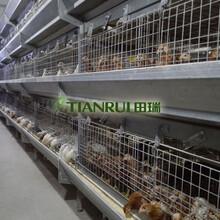 江蘇階梯式蛋雞養殖設備廠家田瑞牧業層疊式養雞設備圖片