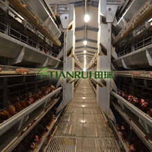 福建階梯式養雞系統生產廠家推薦田瑞牧業圖片