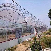 连栋薄膜温室大棚建玻璃温室青海省日光温室旭航温室