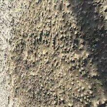 張家口地面修補料露石子修補料修補砂漿廠家直銷圖片
