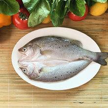 冰鮮鱸魚腌制開背鱸魚三去白蕉海鱸魚鱸魚片鱸魚魚柳原條白蕉海鱸魚圖片