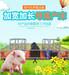 批发福建莆田仙游县高培母猪产床复合板母猪产床养猪设备器械