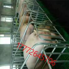 豬用復合板限位欄2.5厚離地母豬定位欄10個豬為一組圖片