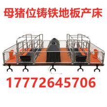 金澤豬籠,湘潭優質母豬產床廠家直銷圖片