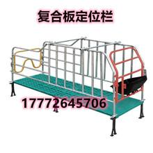重庆巫山县母猪定位栏带复合板限位栏母猪床栏一个母猪定位栏图片