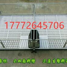 丹东猪塑料保育床猪用杠梁保育栏双体复合板保育栏图片