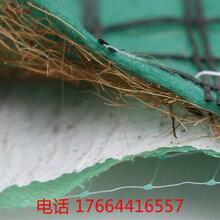 常德抗冲生物毯专业生产厂家——(有限公司——欢迎来电咨询)图片