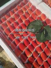 黑草莓苗多少钱一株图片