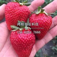 妙香3草莓苗多少钱、妙香3草莓苗多少钱一株图片