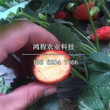 白心草莓苗多少钱一株图片