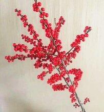 北美冬青年宵花材鲜花批发