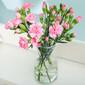 鲜花养护五部曲,简单好记,效果好!图片