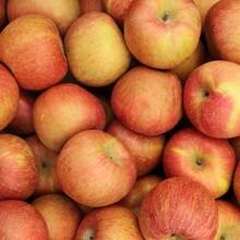 珊夏苹果苗多少钱一颗、珊夏苹果苗批发价格图片
