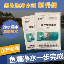鱼塘黑水绿水黄水可使用邦恒微生物净水剂图片