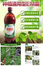 果树预防病害用花草壮长成快结果多质量高图片
