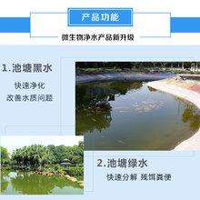 鱼池水质浑浊发臭导致鱼发病是因为什么?怎么处理图片