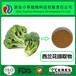 西蘭花提取物蘿卜硫素1%