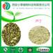 廠家直供槐米提取物蘆丁NF11DAB1095%