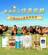 骆驼奶代理骆驼奶怎么代理骆驼奶招代理骆驼奶厂家