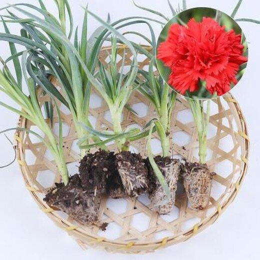 景鑫花卉种植图