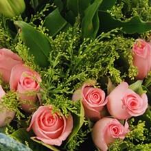山東哪里有玫瑰花苗種植基地景鑫花卉種植玫瑰花苗圖片