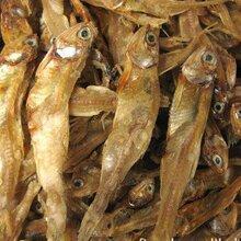 滨州海产干货生产厂家图片