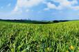 代辦全國肥料登記證肥料手續有機認證企業標準起草