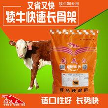 小牛犊饲料配方小犊牛多久能吃饲料图片