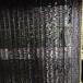 邢臺黑色遮陽網農用遮陽網黑色大棚養殖網旭海供應防曬網