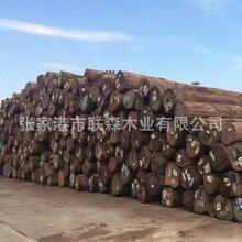 上海南美柚木公司图片