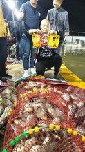 找魚餌生產廠家就找西北狼,專業魚餌廠家直銷圖片
