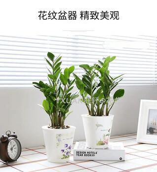 广州天河绿化植物租赁租摆公司庭轩租赁
