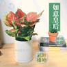 广州荔湾花木租赁公司费用绿植租赁