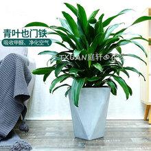 广州室内植物出租