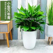 花都室内植物出租哪家好