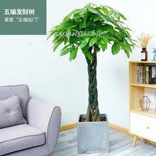 湛江室内植物出租