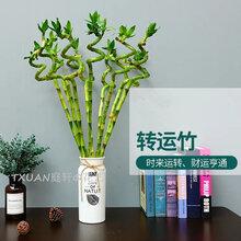 海珠室内植物出租公司