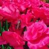 上海漫波游乐设备,玫瑰花滴胶造型租赁出售