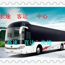 青岛到衢州大巴卧铺客车票价图片